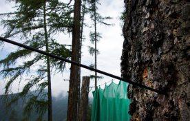 Bogenschießen - Vigilius Mountain Resort