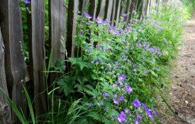 Blumen- Vigilius Mountain Resort