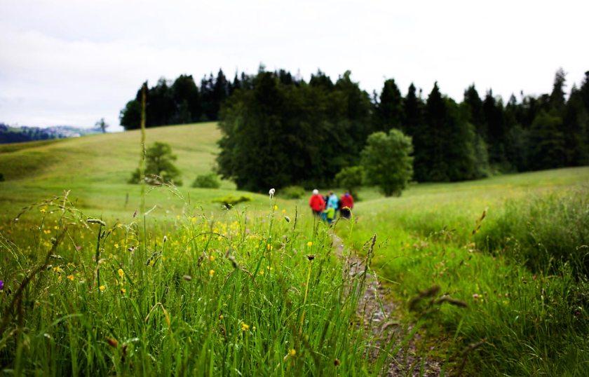 Moore Krumbach Wanderung Morgendämmerung