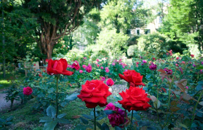 Rosen im Laurin Park