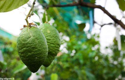 Früchte - Zitrusgarten – Faak am See