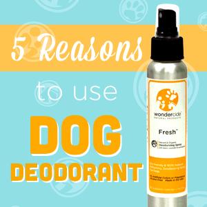 5 Reasons to Use Dog Deodorant « Wondercide Blog