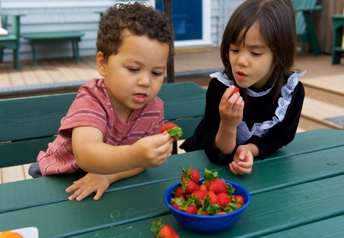 Children eating strawberries in home preschool
