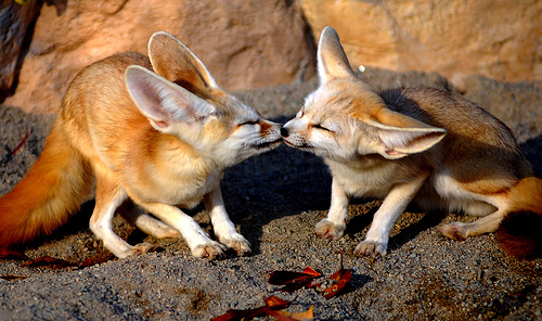 wednesday cute the fantastic fennec fox workman publishing