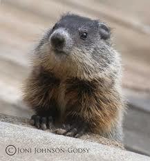 hello groundhog