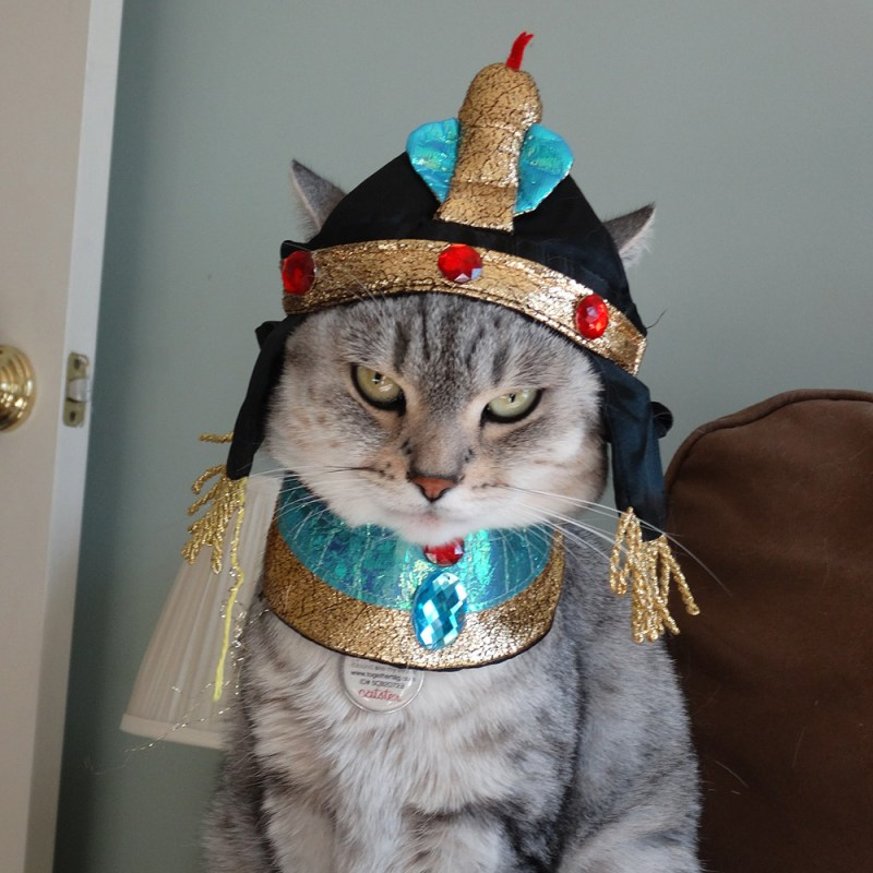 Bastet Cat Costume