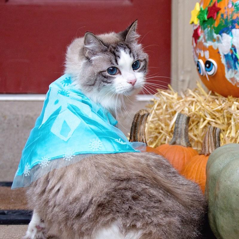 Frozen Cat Costume