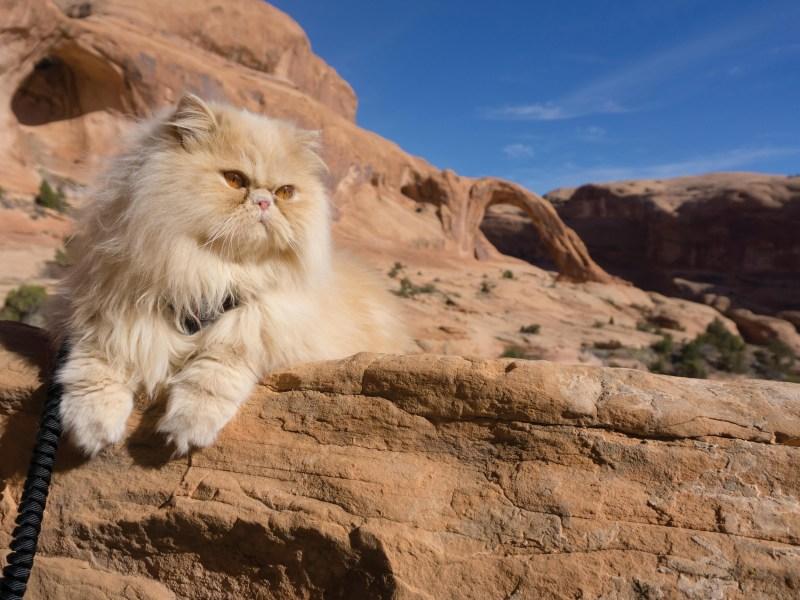 Is My Cat an Adventure Cat?