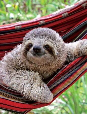 Sloth Image 1