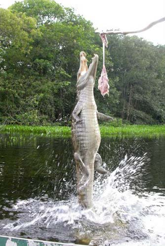 Pêche au croco