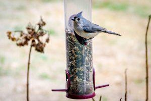 Titmouse Bird Feeder