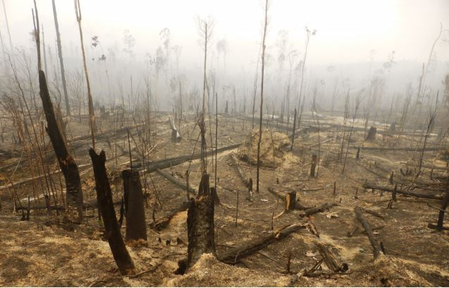 Forest cleared by buring, Tesso Nilo