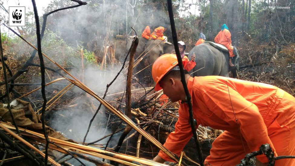 Fighting Fires in Tesso Nilo