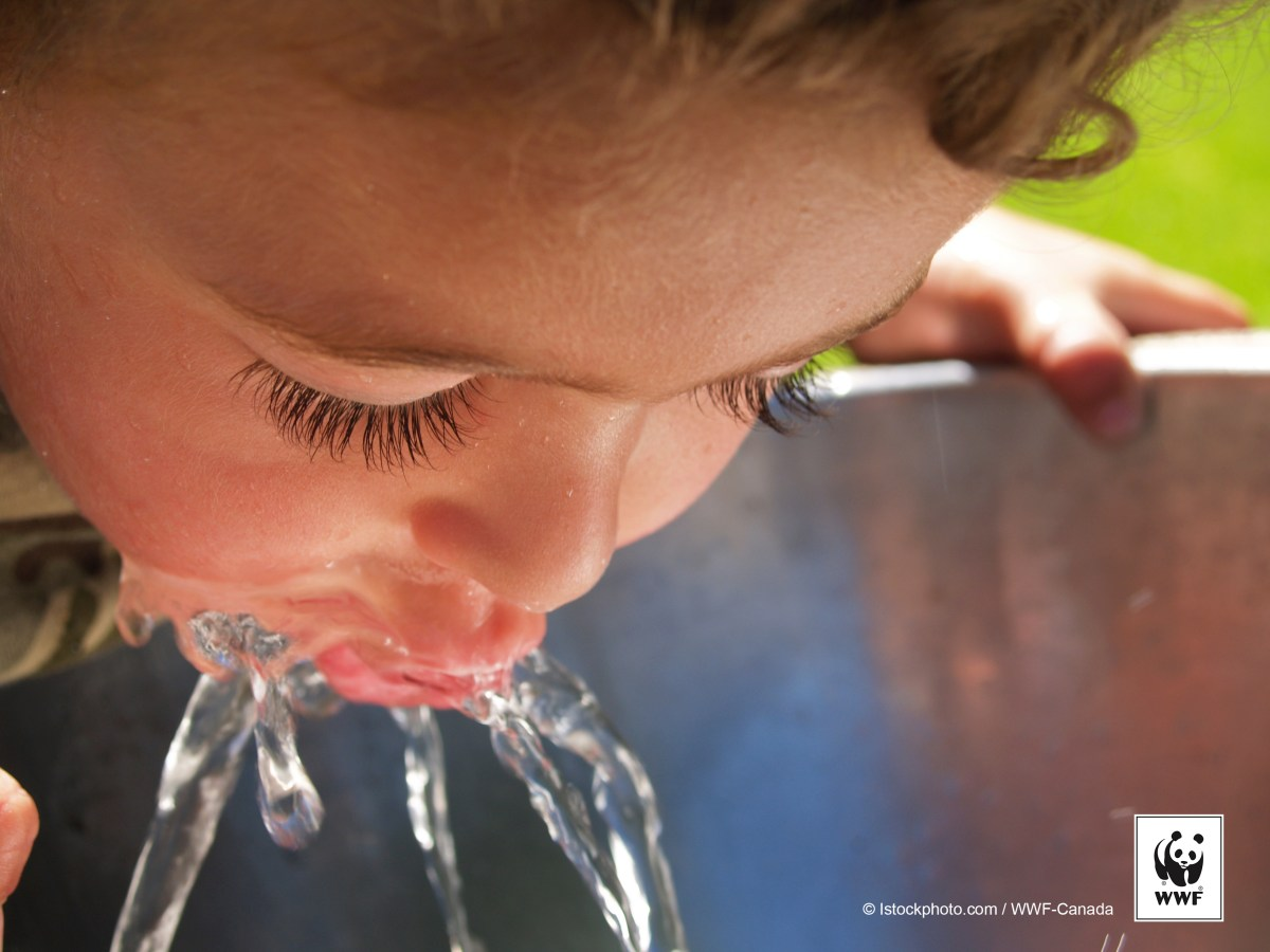 Young boy drinking from a water fountain outside in a park during the summer.