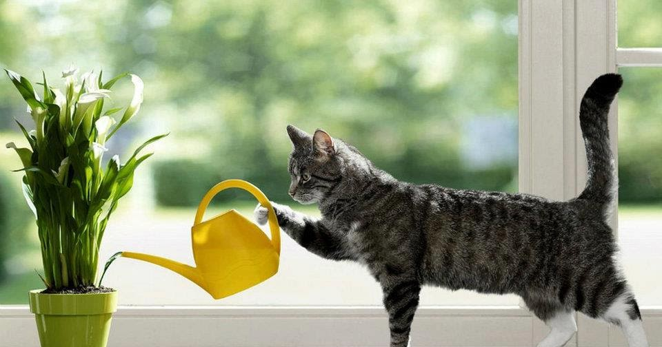 cat watering plant photo