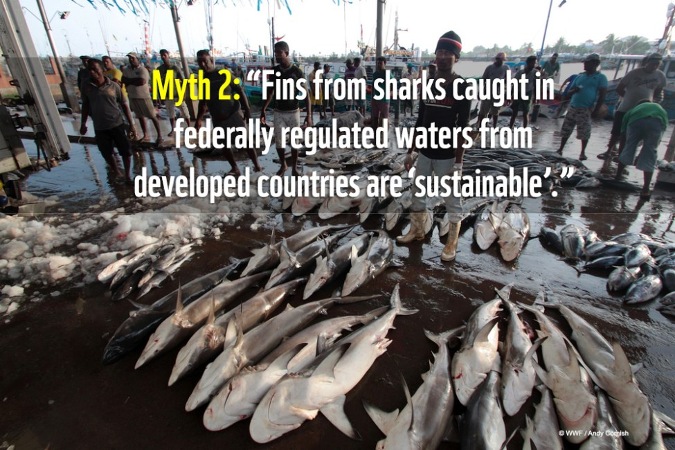 Various sharks being sorted before auction at the Negombo fish market, Sri Lanka.