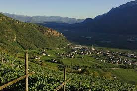 vigne di Terlano