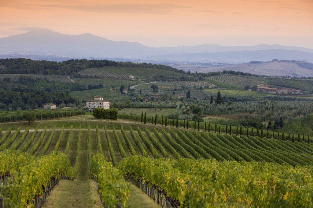 Vitigni del vino chianti classico