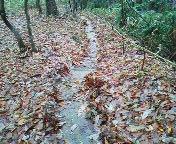 落葉絨毯にできた水路あと