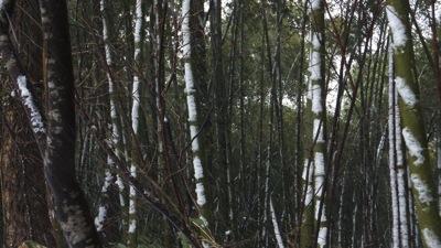 竹の節もクッキリ