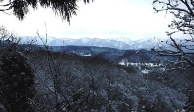 5杉林遠望