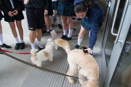 PuppyTherapy_01May2017-3800