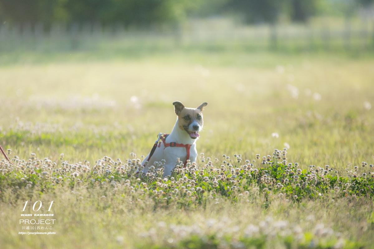 野原の中の犬