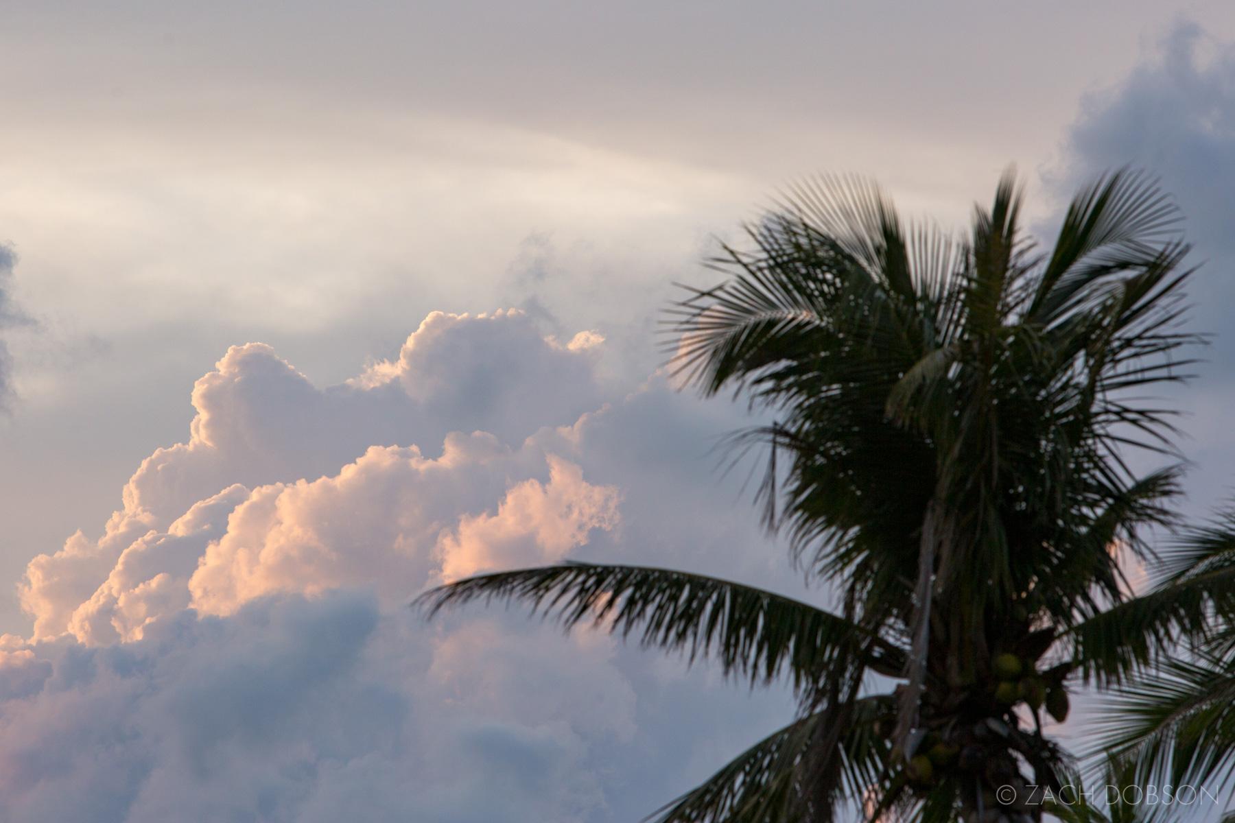 Islamorada-Florida Keys-Palm Tree