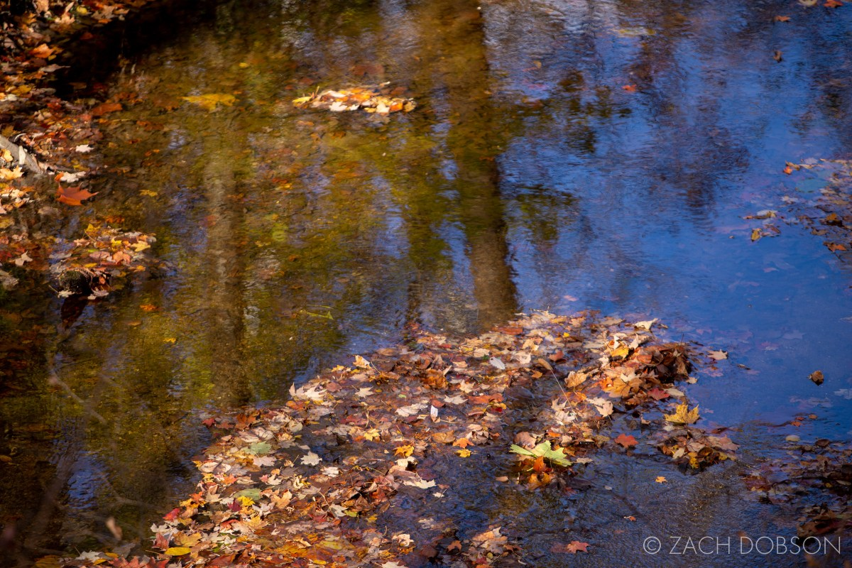 Fishers Indiana Fall Photography