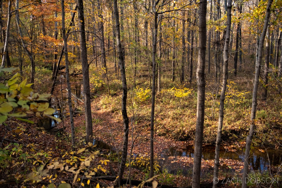 Ritchey Woods Nature Preserve in fall