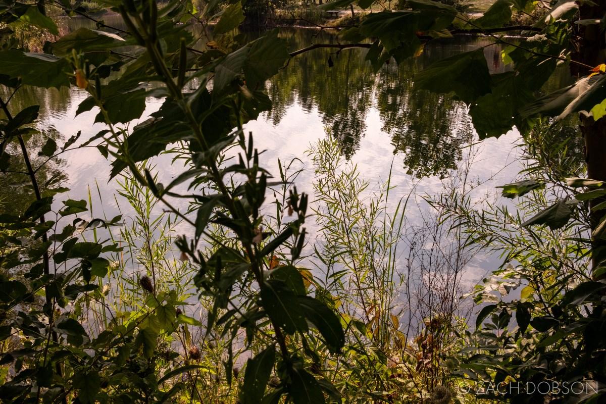 pond at golden hour