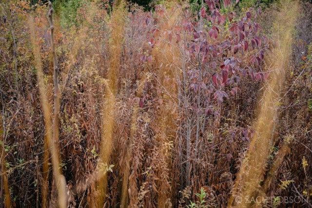 fall grasses and plants in indiana