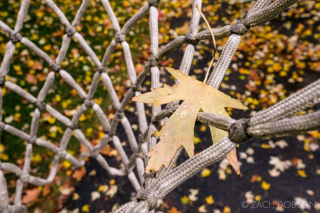 fall leaf with water droplets caught in a basketball net