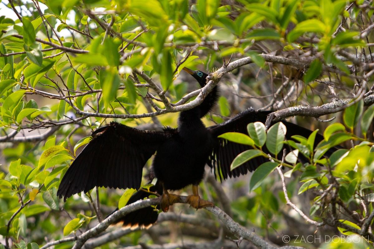 everglades national park anhinga trail bird