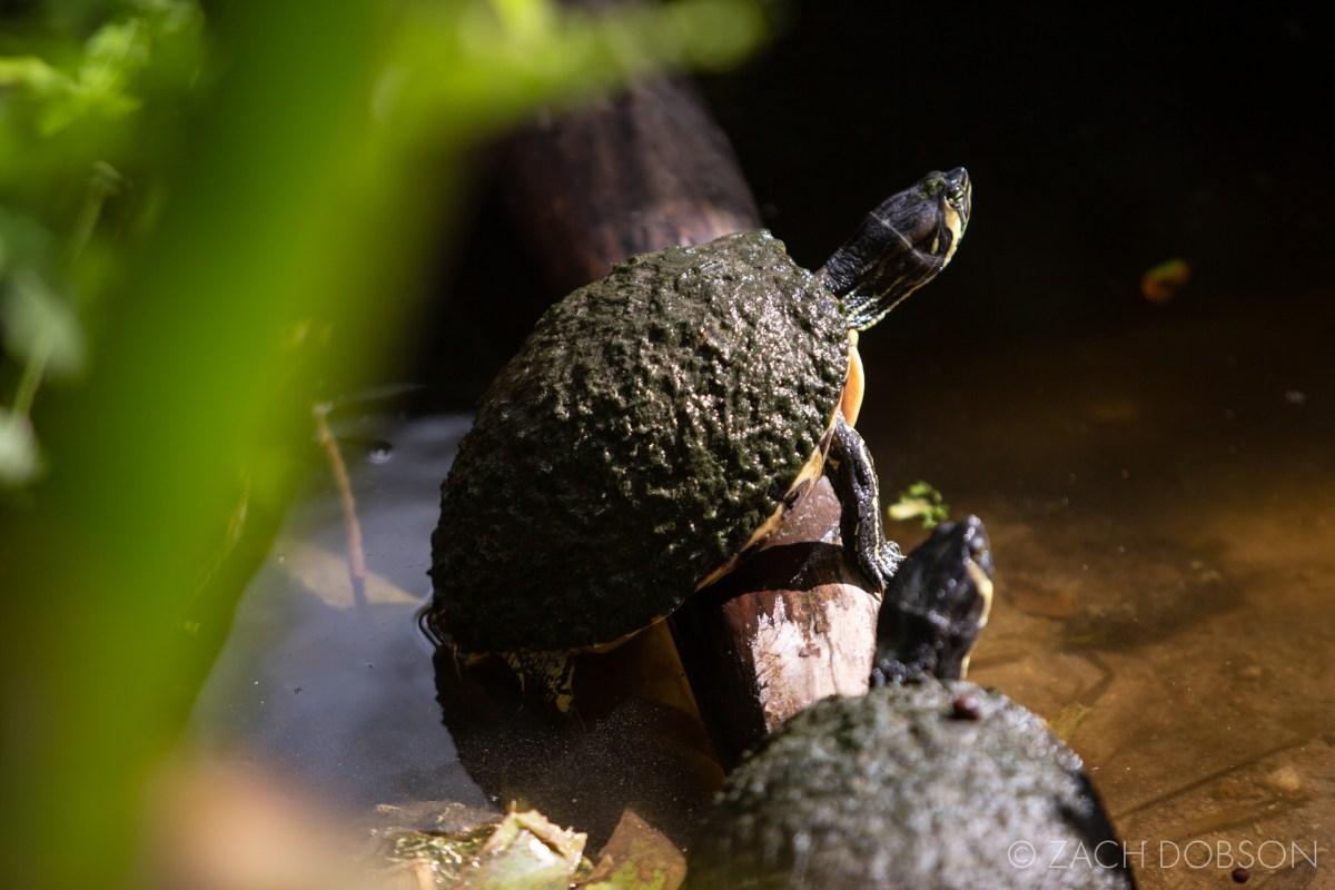 wonder gardens bonita springs turtle