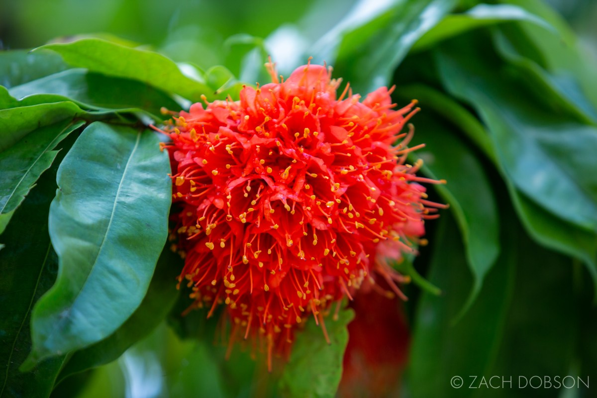 flower bloom wonder gardens