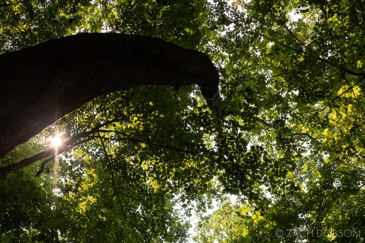 mccormicks creek state park spencer indiana canopy