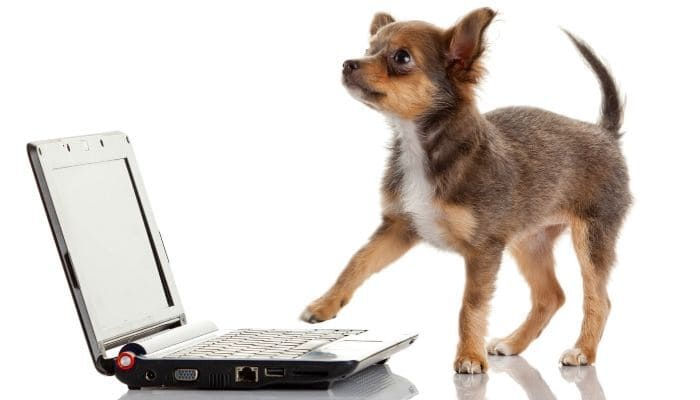 puppy sending emails