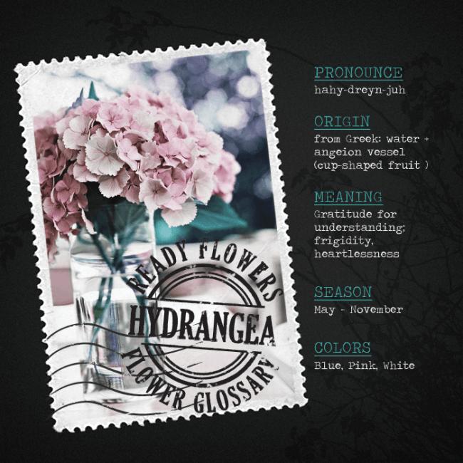 flower-glossary-hydrangea