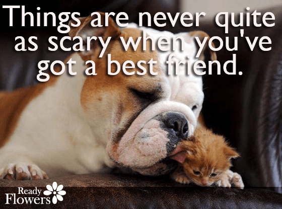 Bulldog and kitten with friend quote
