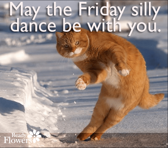 Grove cat doing the Friday silly dance.