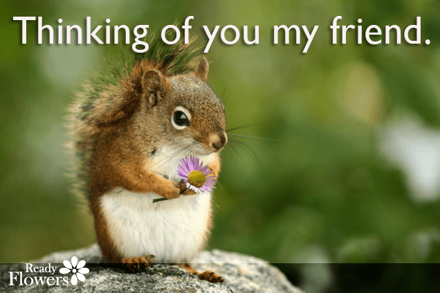 Squirrel with friend quote.