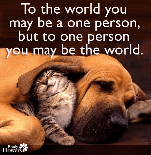 Kitten, dog and love quote.