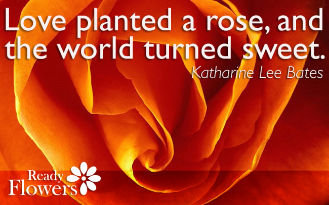 Love planted a rose