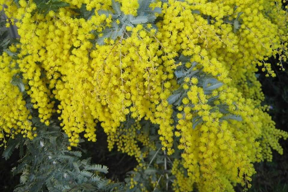 5 Native Australian Floras You Need To Know Right Now