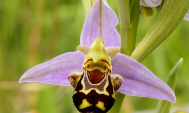 7 Strange Yet Amazingly Beautiful Orchids