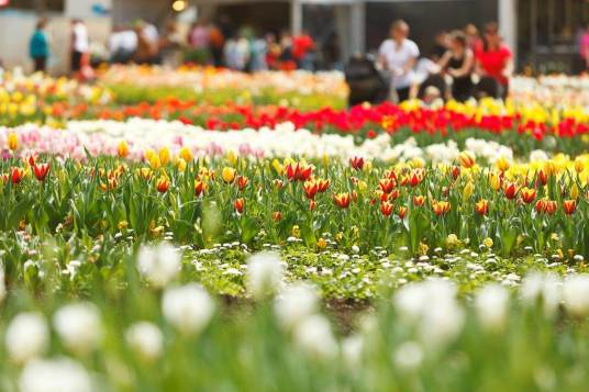 Floriade flowers