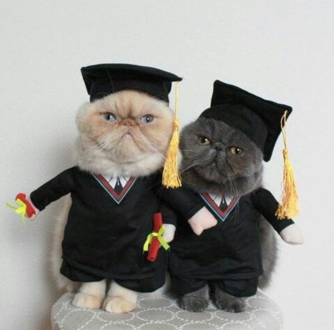 photo of two cats in graduation caps and gowns