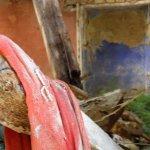 P8250895 FILEminimizer - Le Terme di San Michele alle formiche