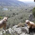 20160406 141556 FILEminimizer - Settimo Andreoni : lo scultore dei boschi di Montemagno
